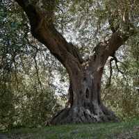 L'albero della mia vita