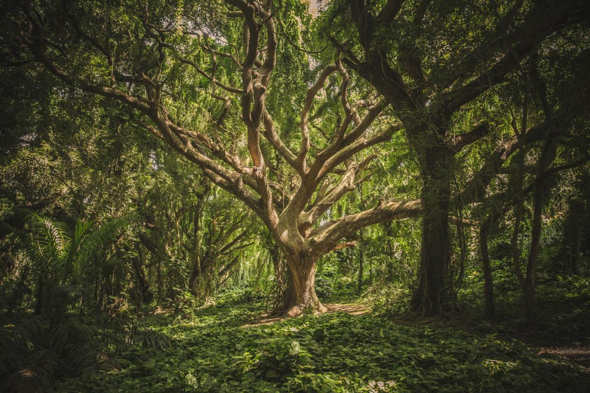 corpo albero