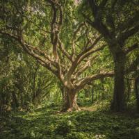 Il corpo albero