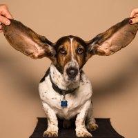 Impara ad ascoltare l'intuito